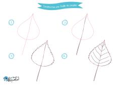 Dessine-moi les feuilles – dessin et coloriages de feuilles d'arbres